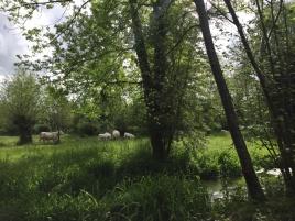 Am Seerostenteich in der Nähe des Hauses Claude Monet in Giverny