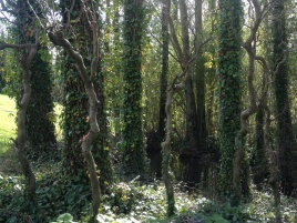 Paysage de randonnée pédestre dans le Vexin français