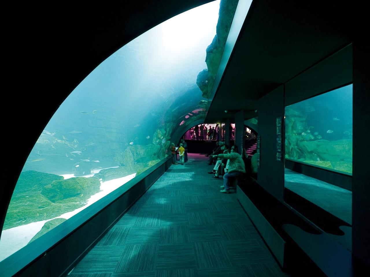 aquarium de cin 233 aqua stouring in