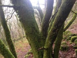 Tronc d'arbre multiple lors de randonnées dominicales dans le Vexin français
