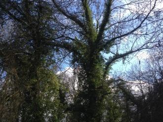 Arbre lors d'une randonnée pédestre dans le Vexin français